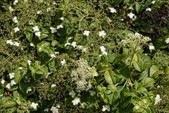 Florezca la frontera en jardín hermoso en West Yorkshire Inglaterra foto de archivo
