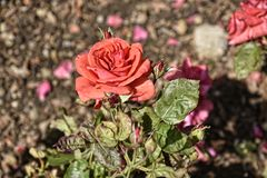 Florezca la frontera en jardín hermoso en West Yorkshire Inglaterra fotografía de archivo libre de regalías