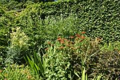 Florezca la frontera en jardín hermoso en West Yorkshire Inglaterra imagen de archivo