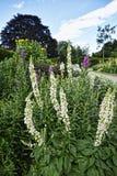 Florezca la frontera en jardín hermoso en West Yorkshire Inglaterra fotos de archivo