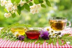 Florezca la taza de la miel de té bajo rama del jazmín Té en el jardín del verano Imagen de archivo