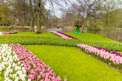 Florezca la tira de tulipanes rosados y de jacinto blanco en el parque en Keukenhof Imagenes de archivo
