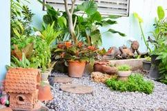 Florezca las plantas ornamentales en el jardín al lado de la casa Fotografía de archivo libre de regalías