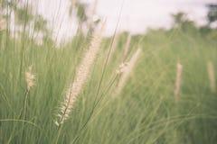 Florezca soplar de cristal en la falta de definición de movimiento del viento Foto de archivo libre de regalías
