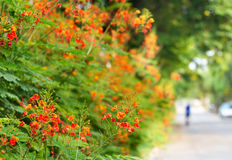 Florezca vibrante en la calle, el foco suave y la falta de definición Imagen de archivo libre de regalías