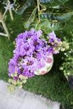 Floribunda del Lagerstroemia Imágenes de archivo libres de regalías
