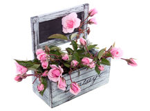 floribunda kwiatów menchie wzrastali Fotografia Royalty Free