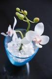 Floriculture Obraz Royalty Free