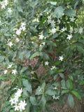 Floriculture & x28; ATT ARBETA I TRÄDGÅRDEN ÄR EN STOR PASSION& x29; INTERPLANTINGOF-TRÄD LÄNGS KOLONIN S & x28 för SIDA THEPARK; Arkivfoto