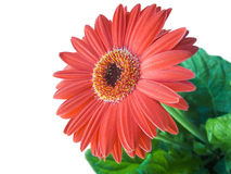 Floriculture Royalty Free Stock Images