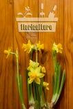 Floriculture Stock Image