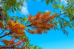 Florid tree branch Royalty Free Stock Images