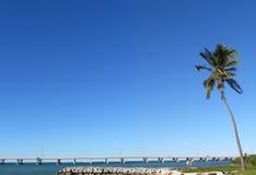 Florida Foto de Stock
