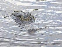 Florida-Airboatreise, unter Sumpfgebieten, Alligator nahe dem Boot stockfotografie