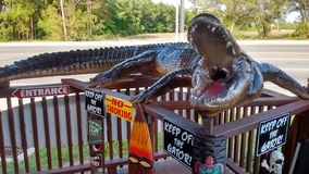Florida-Alligatorzeit Lizenzfreie Stockbilder