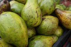 Florida Avaocados. Ripe avocados grown in Pine Island Florida. Much larger than the typical Haas avocado, Florida avocados can be up to 3 - 4lbs royalty free stock photography