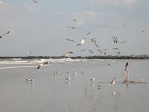 Florida Beach. Girl running on beach surrounded by seagulls stock photos