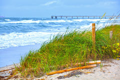 Florida Beach grass dunes and waves during storm Stock Photos