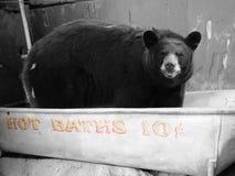 Hot Baths ten cents. Florida bear in tub offer 10 cents baths Stock Photos