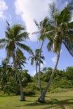 Florida befestigt tropische Palmen Stockbild