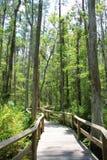 Florida Boardwalk. The boardwalk through the swamps in Gatorland near Orlando Florida Stock Images