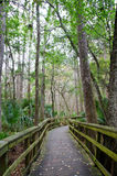 Florida boardwalk trail stock photos