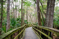 Florida boardwalk trail. A trail in a hardwood hammock, Highlands Hammock State Park, Florida royalty free stock image