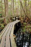 Florida boardwalk trail. A trail in a hardwood hammock, Highlands Hammock State Park, Florida royalty free stock images