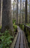Florida boardwalk trail Stock Images