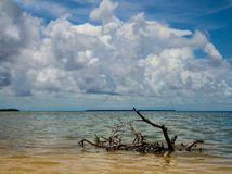 Florida-Bucht Lizenzfreie Stockfotos