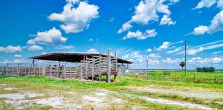 Florida Cattle Farming. Cattle barn and farm at the Dinner Island Ranch Wildlife Management Area in south central Florida stock photos