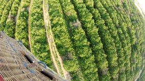 Florida Citrus Agriculture stock video footage