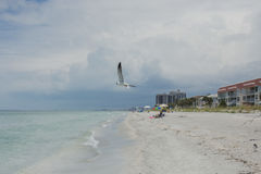 Florida, Clearwater Stockfoto