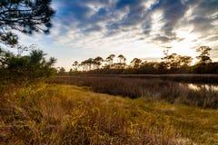 Florida coastal estuary. Beautiful Florida panhandle coastal estuary preserve in the late afternoon royalty free stock photo