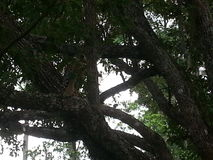 florida djurliv Royaltyfri Fotografi