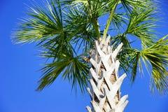Florida-Eichhörnchen auf Baum stockfoto