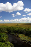 Florida Everglades. Scenic view of the Florida Everglades, Shark Valley Stock Photography