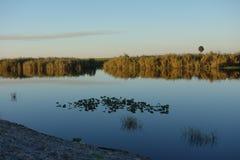 Florida Everglades Royaltyfri Bild