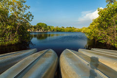 Florida Everglades royaltyfri foto