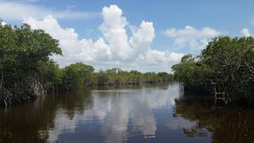 Florida Everglades stock afbeelding