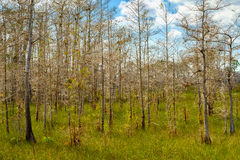 Florida Everglades royalty free stock photo
