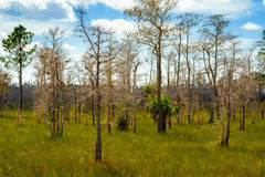 Florida Everglades. Beautiful landscape of the Big Cypress National Preserve in the Florida Everglades Royalty Free Stock Photo