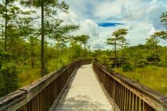 Florida Everglades. Beautiful landscape of a nature trail boardwalk in the Grand Cypress Preserve in the Florida Everglades Stock Photos
