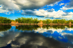 Florida Everglades. Beautiful landscape of a waterway with reflection along the Grand Cypress Preserve in the Florida Everglades stock photo