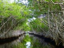 Florida Everglades, evergladesna på en airboat Arkivfoton
