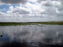 Florida Everglades Royalty Free Stock Photography