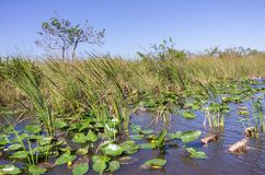 Florida Everglades landscape Royalty Free Stock Photography