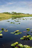 Florida Everglades National Park. Scenic landscape with lilly pads and blue skies in the Florida National Park Everglades at Everglades Holiday Park Stock Photos