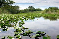 Florida Everglades National Park. Scenic landscape with lilly pads and blue skies in the Florida National Park Everglades at Everglades Holiday Park Stock Photo