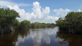 Florida Everglades stock image